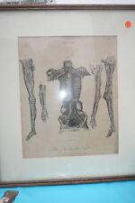 "antike Bilder  "" Skelette"" um 1880"