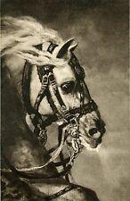 Schimmel Pferd Gemälde Louvre Paris Faksimile auf Büttenpapier 32