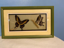 Framed And Matted Papilio Lormieri ( C. Africa )
