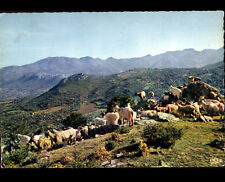 GHISONACCIA (CORSE) TROUPEAU de CHEVRES en 1967