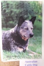 Australian Cattle Dog Breed, Herding dog, Every day decorative House Flag 28x40""