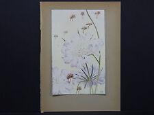 Botanicals, Floral, Edward J. Detmold, c. 1913 #04