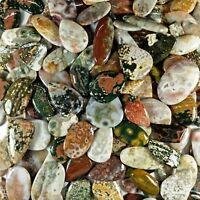 Ocean Jasper Natural Superb Premium Best Quality Wholesale Lot Gemstone Video