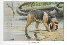 Otterhound - 1927 Color Dog Art Print - Matted