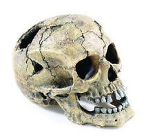 Classic Skull Adorno Acuario vivero de peces de humanos grandes 20cm 2966