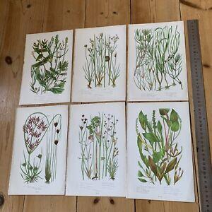 Set Of 6 Vintage Botanical Prints, Decorative