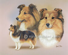 Signed Shetland Sheepdog Multistudy Giclee Print by Robert J. May