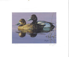 MINNESOTA #10 1986 STATE DUCK STAMP PRINT LESSER SCAUP by Brian Jarvi