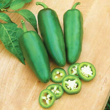 100 Hot Jalapeno Pepper Seeds Capsicum Organic S044