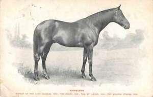 Campion Horse Isinglass Celebrated Racer Series Vintage Postcard AA35871