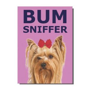 Funny Yorkshire Terrier Dog Bum Sniffer Birthday / Greetings Card