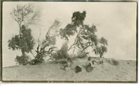 Enfants posant dans un paysage aride  Vintage silver print.  Tirage argentique