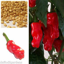 Penis Chilli Red Hot Peter Pepper Willy Chillies, 100% Geunine 30 Seeds