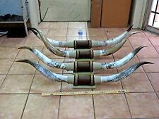 "MOUNTED STEER HORNS 5' - 5' 6"" TIP TO TIP  (1 SET) COW BULL HORNS LONGHORNS"