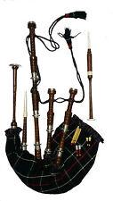 NUOVO grandioso cornamusa scozzese Highland in Legno Sheesham Naturale Argento Mounts/cornamuse