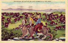 Rounding Up Cattle On Jack Rabbits In The West 1944