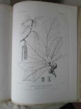 Vintage Print,Plate 434, QUERCUS IMBRICARIA X COCCINEA Silva,Trees,1st Ed,c1900