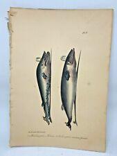 Original Antique Lacepede 1832 Hand Colored Plate 7 Whales