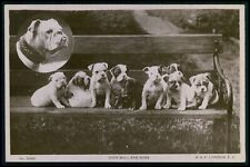 English Bulldog dog John Bull & Sons original old 1910s photo postcard