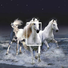 Unbranded Horses Vinyl Wall Decals & Stickers