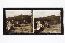 Bormes-les-Mimosas Chiens Moulin France Photo Stereo Plaque de verre 1932