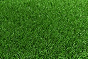 1 lb Low Grow Creeping Red Fescue Grass Seed Shade Tolerant Lawn Turf Fairway