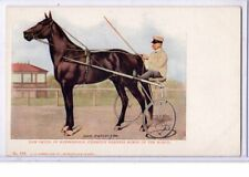 Vintage Sports Postcard - Dan Patch of Minneapolis Champion Harness Horse