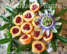 Passionsblume Passiflora resistenti alf reddo blu bianco 6 semi freschi SUPER