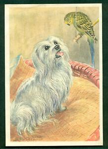 MALTESE DOG GERMAN ART PRINT 1960 R.S.SCHOLZ  BERLINER MORGEN POST