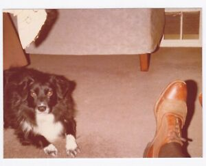 Vintage 70s PHOTO Dog Looking at Photographer & Man's Foot Shoe