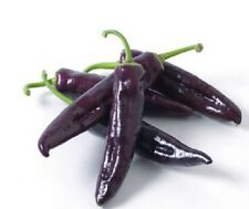 Vegatable seeds - Hot Long Capsicum purple Chili peppers 20 seeds Cayenne No-Gmo
