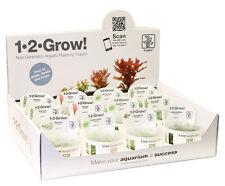 In Vitro Pflanzenset für 60l Aq./ Wasserpflanzen Aquariumpflanzen schneckenfrei