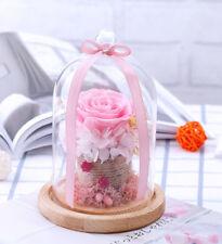 Valentine Anniversary Gift Preserved Rose in Glass Forever Immortal Fresh Flower