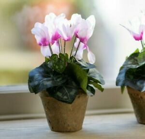 Artificial Potted Faux Cyclamen House Plant Pink Flowers RusticGarden Flower Pot