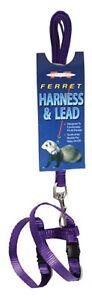 Marshall Pet Products Ferret Harness & Lead Set - PURPLE, PURPLE, PURPLE