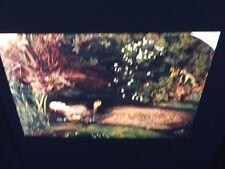 "John Millais ""Ophelia"" English Pre-Raphaelite 35mm Art Slide. Rare"