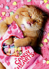 Sweetheart Cat Funny Valentine's Day Card with Hearts and Rose Petals