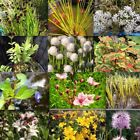 Multi Listing Various POND PLANTS With FREE 3L Aquatic Planting Bags