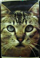 """CAT FACE STUDIO ONE POSTER 4421 1972  Ed Simpson Photo 24"""" x 36"""" Original Owner"""