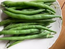 Blue Lake bush bean seeds, Usa grown, eat fresh or freeze surplus, self reliant