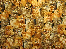 CATS REALISTIC KITTY CAT PLAYFUL COTTON FABRIC FQ