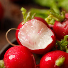 Cherry Radish Bonsai Seeds Plants Organic Juicy