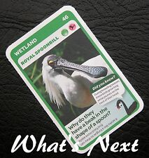 Woolworths   AUSSIE ANIMALS   Card 46/108 WETLAND Royal Spoonbill (Free Post)