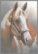 Pet portraits /horse portraits