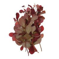10 pezzi pressati fiori secchi rossi veri foglie secche fiori per
