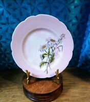 Late 1800s Haviland & Co. Hand-Painted Plate/Wild Daisies/Artist Signed/8""