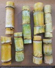 8 sticks Sugar Cane Green Juicing Chewing Organic Plant