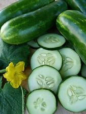 100 Marketmore 76 Cucumber Seeds-Open Pollinated-NON GMO-Organic