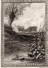 EAU FORTE / Fables de la Fontaine 1883 / LES DEUX TAUREAUX ET UNE GRENOUILLE