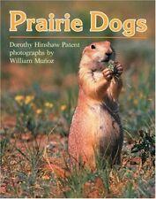 Prairie Dogs Clarion Nonfiction
